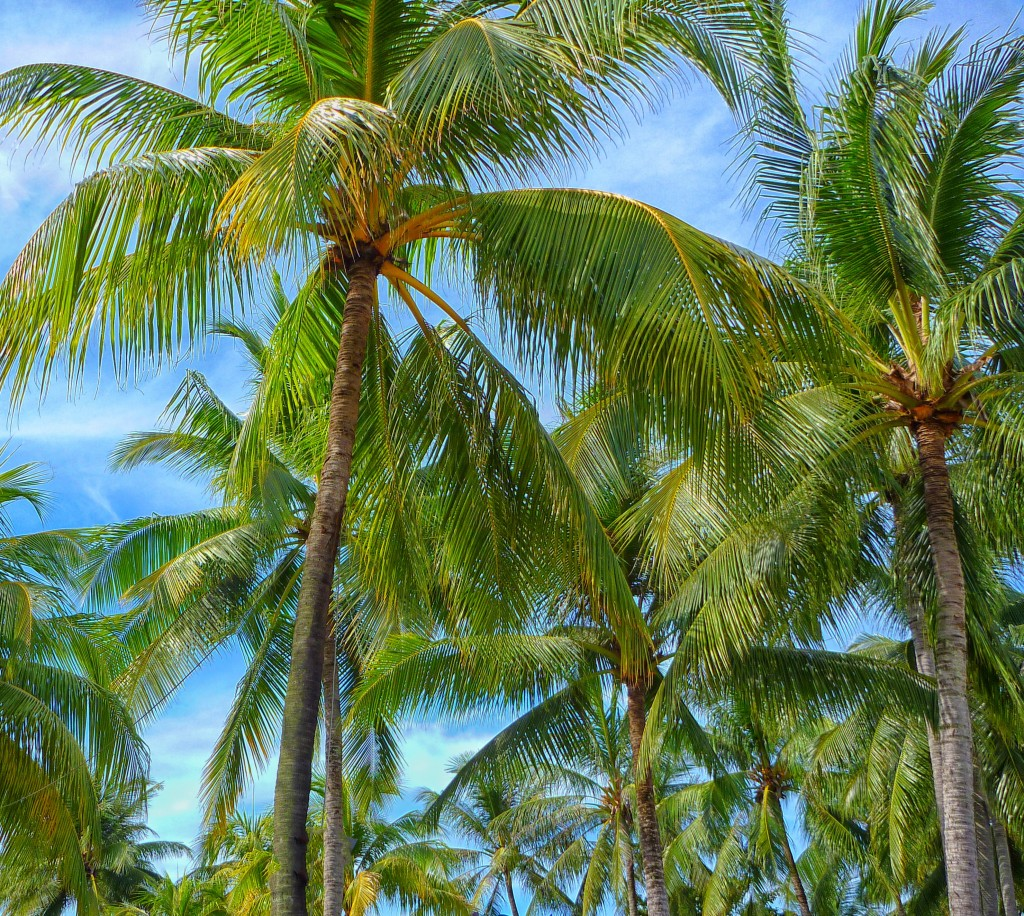 tropical-miracle-1
